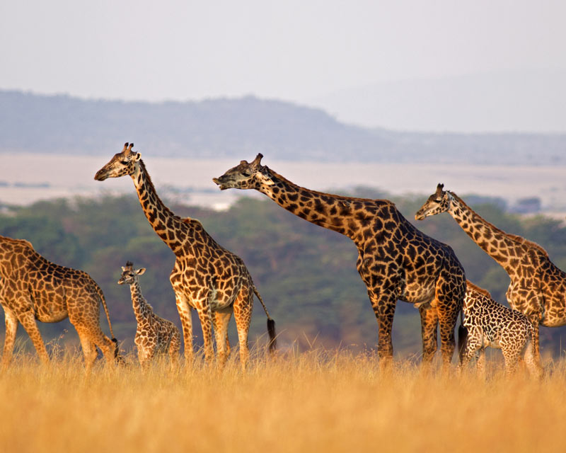 7 Interesting Facts About Languages in Africa